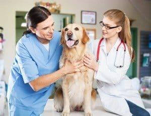 itchy dog at vet