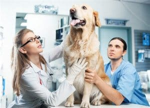 Make Your Dog's Trips to the Vet a Pleasant Experience
