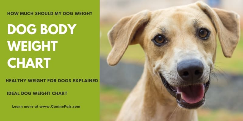 Dog Body Weight Chart