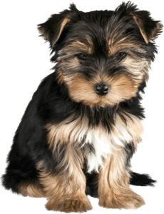 find a puppy breeder
