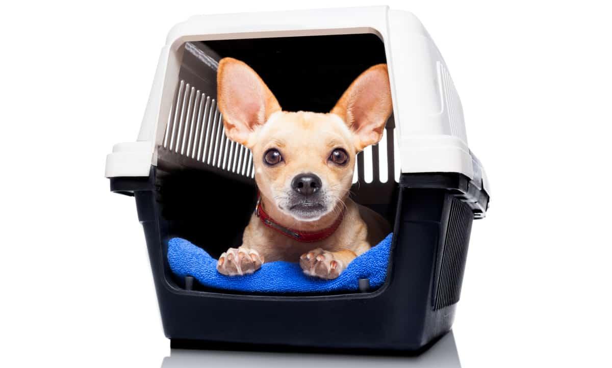 Older Dog Crate Training