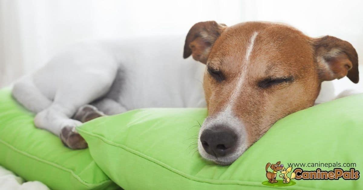 How Much Do Dogs Sleep