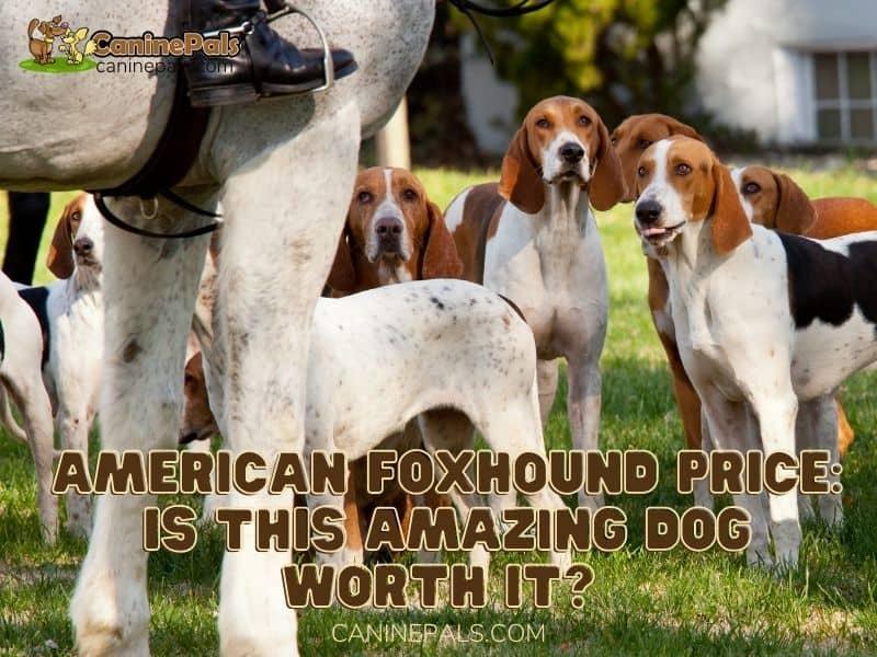 American Foxhound Price