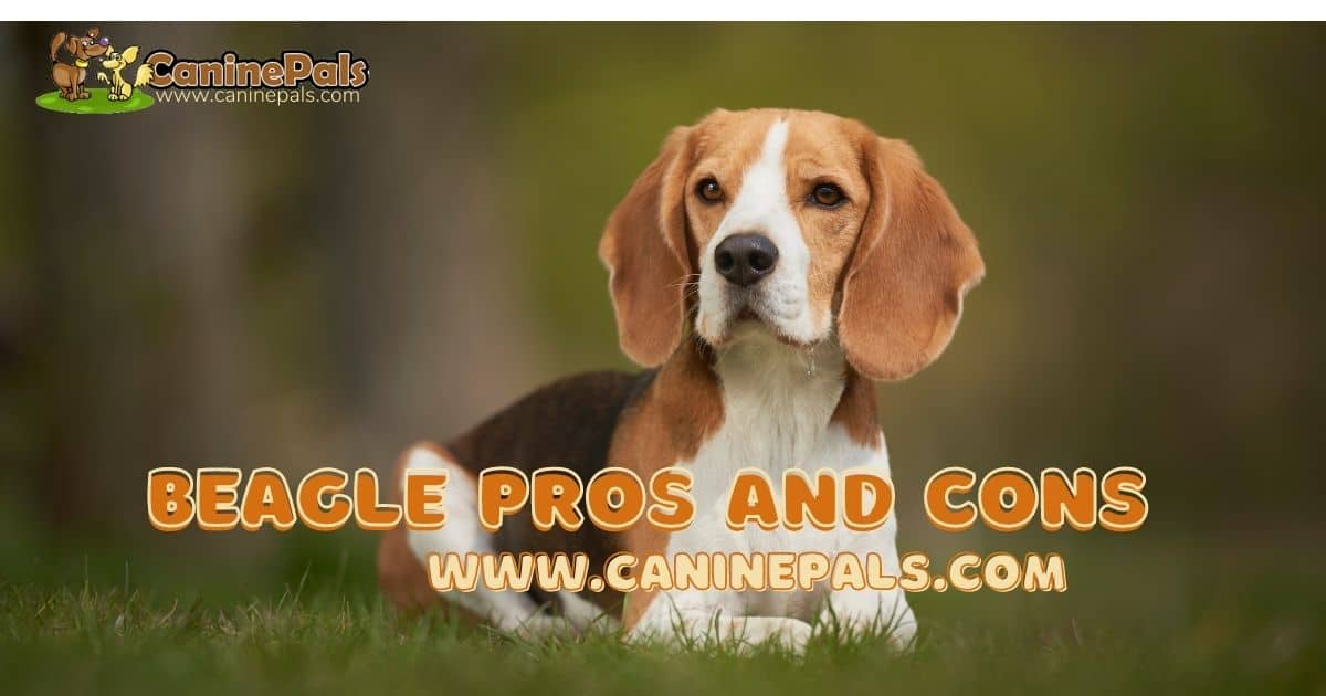 Beagle Pros and Cons