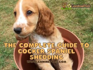 The Complete Guide to Cocker Spaniel Shedding: What Owners Need to Know