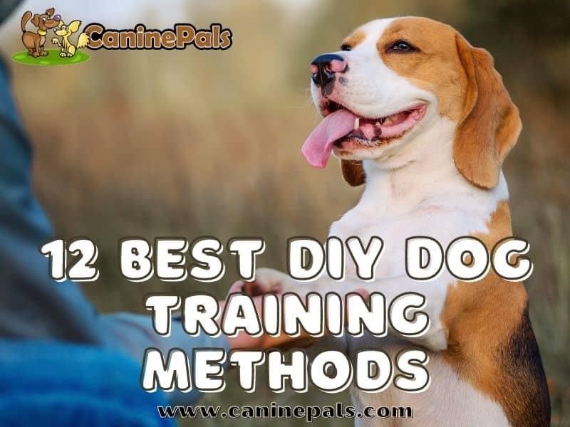 12 Best DIY Dog Training Methods