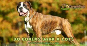 Do Boxers Bark A Lot?