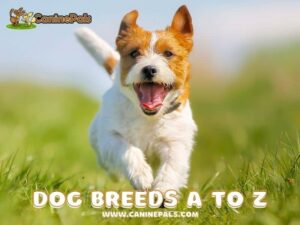 Dog Breeds A to Z