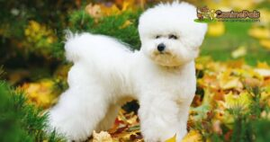 Ultimate Guide to How Much Does a Bichon Frise Cost?
