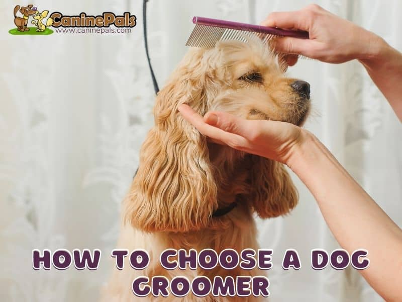 How To Choose A Dog Groomer