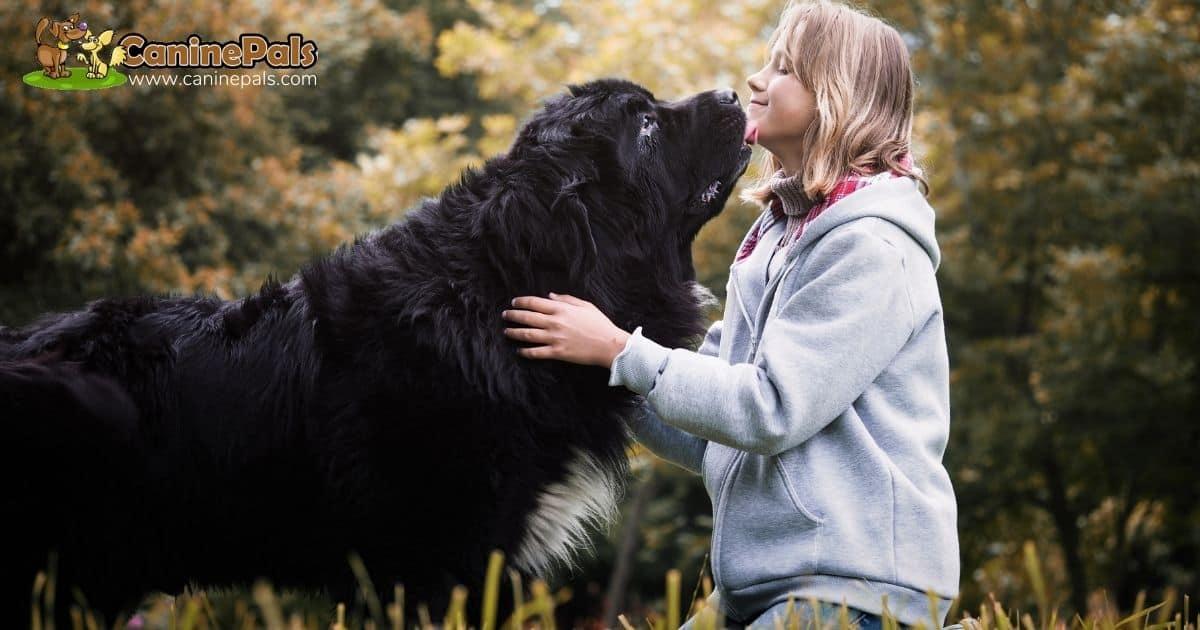 Newfoundland Dog and Children