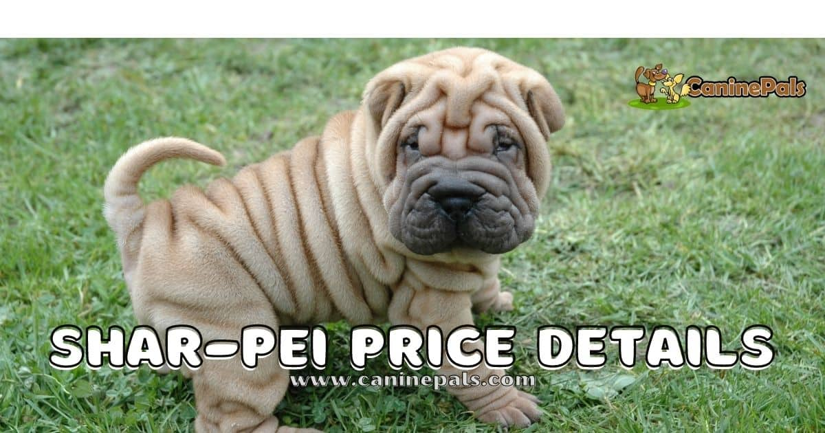 Shar-Pei Price