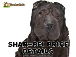 Shar-Pei Price Details