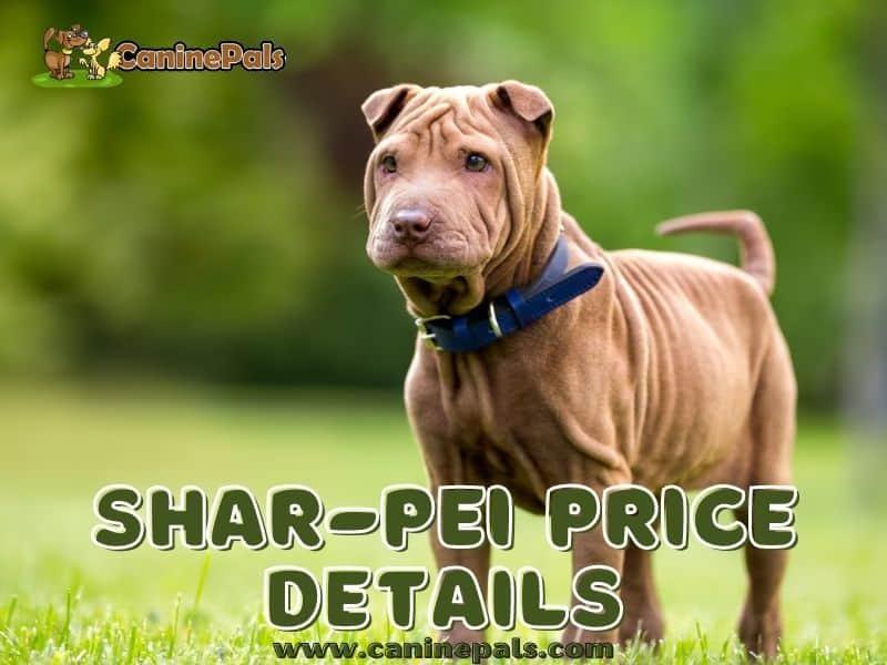 Chinese Shar-Pei Price Details