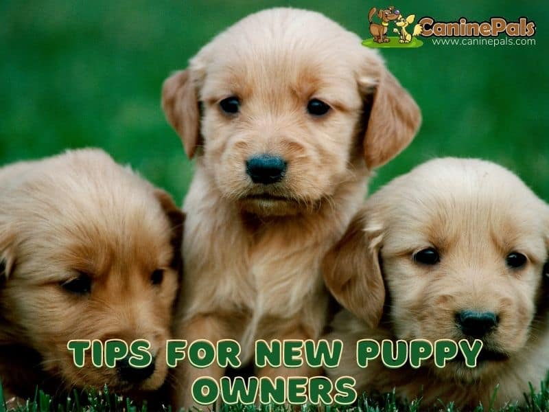 Tips For New Puppy Owners