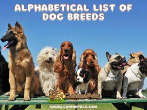 Alphabetical list of Dog Breeds-Dog Breeds A to Z