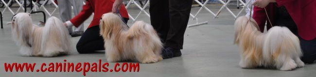 dogs at a dog show