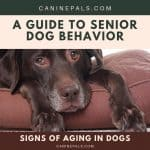 Signs of Aging in Dogs