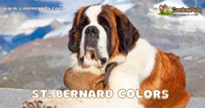 Complete St. Bernard Colors in Detail Explained