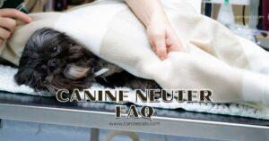 Canine Neuter FAQ