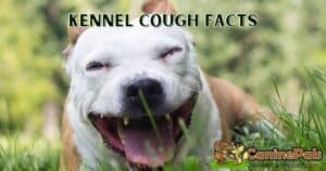 Kennel Cough Facts