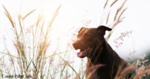 Dog Enjoying the Outdoors