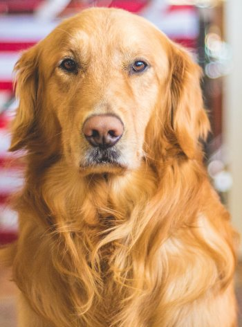 How Safe Are Veterinary Antiparasitic Drugs For Dogs
