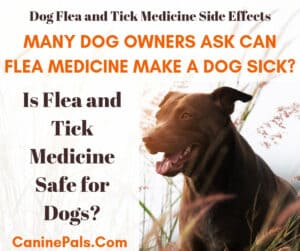 Dog Flea and Tick Medicine Side Effects