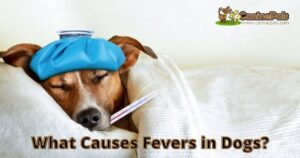 What Causes Fevers in Dogs?