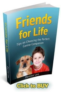Tips on Choosing the Perfect Canine Companion