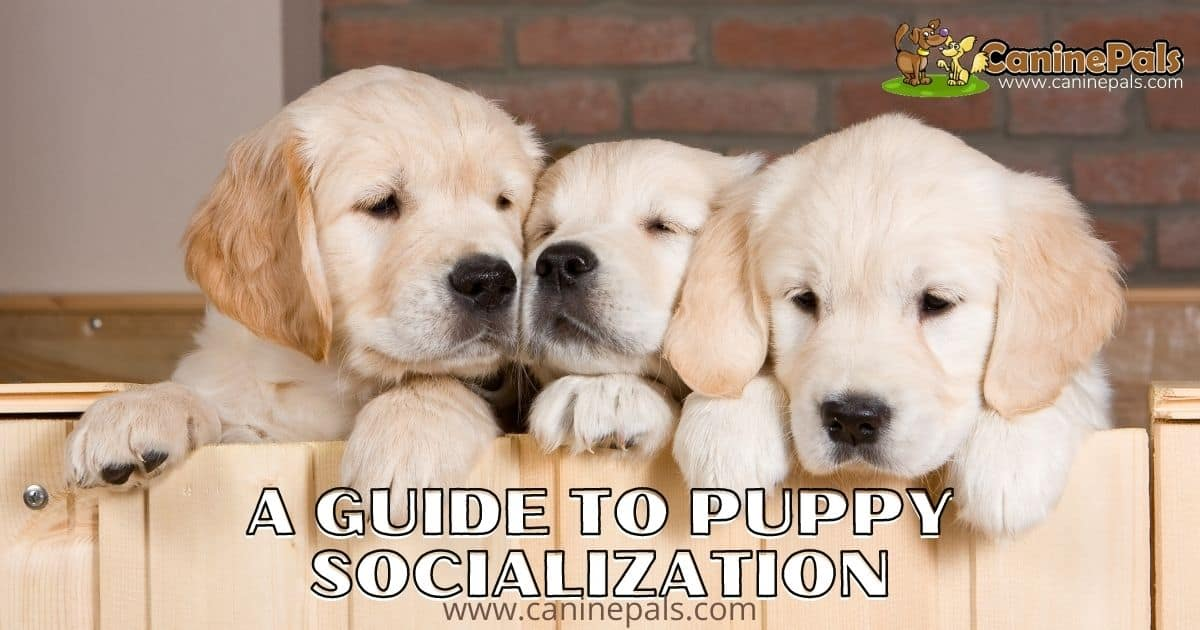 A Guide to Puppy Socialization