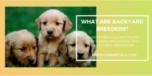 10 Differences between Reputable Breeders and Backyard Breeders