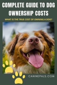 What is the true cost of owning a dog?