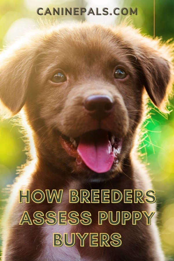 How Breeders Assess Puppy Buyers