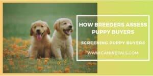 Screening Puppy Buyers