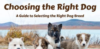 Choosing the Right Dog