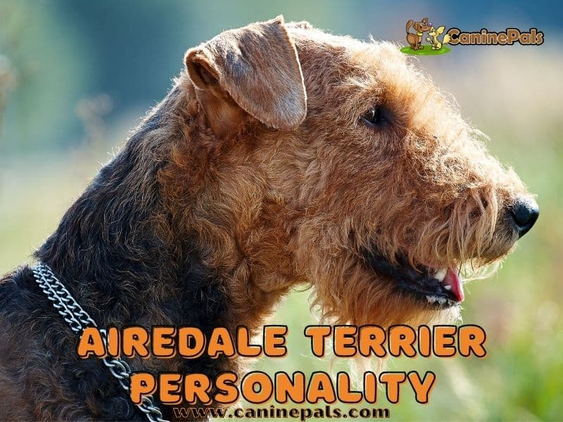Airedale Terrier Personality