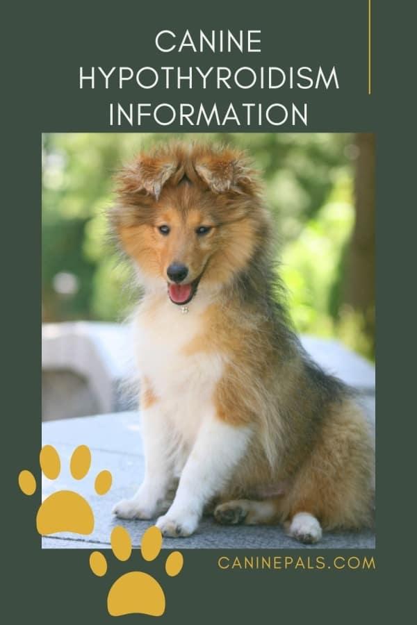 Canine Hypothyroidism Information