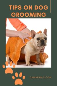 Tips on Dog Grooming
