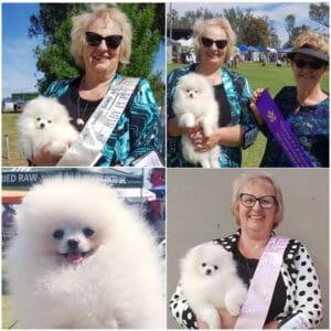 Denise Leo with a prize-winning white Pomeranian puppy.