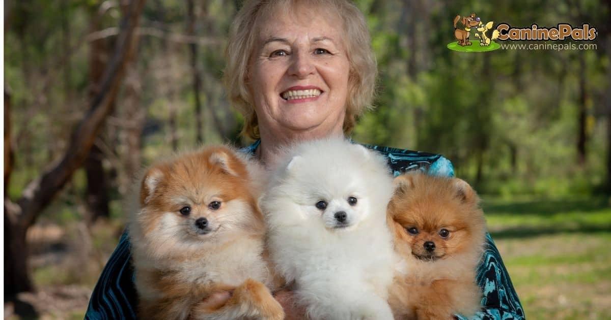 Denise Leo and Pomeranians