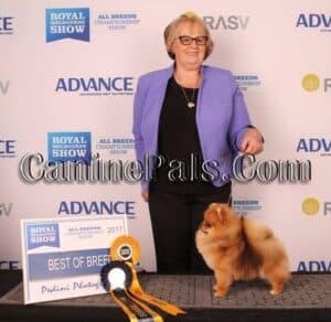 Denise Leo with a prize-winning Pomeranian.