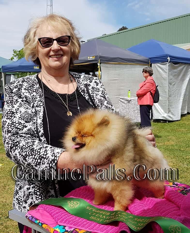 Denise Leo with a prize-winning Pomeranian