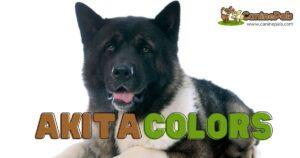 Akita Colors