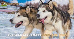Alaskan Malamute Pros and Cons