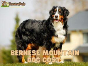 Bernese Mountain Dog Cost Explained