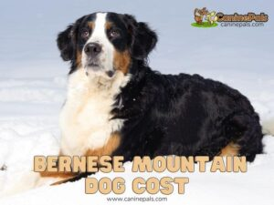 Bernese Mountain Dog Cost