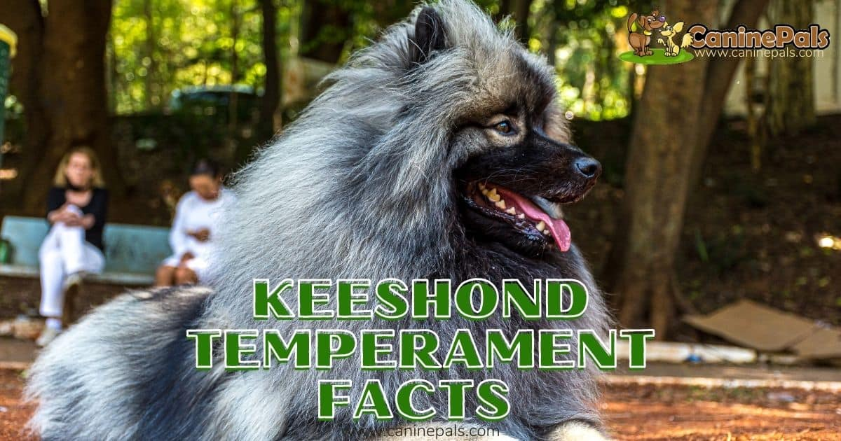 Keeshond Temperament Facts