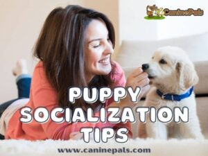 Puppy Socialization Tips
