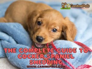 Do Cocker Spaniels Shed? What Owners Need to Know